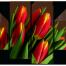 С 8 марта от FireTechnics