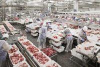 Мясоперерабатывающий комплекс EmpireFood в Алматинской области